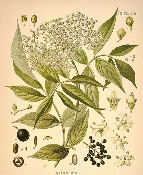 How To Make a classic elderflower cordial