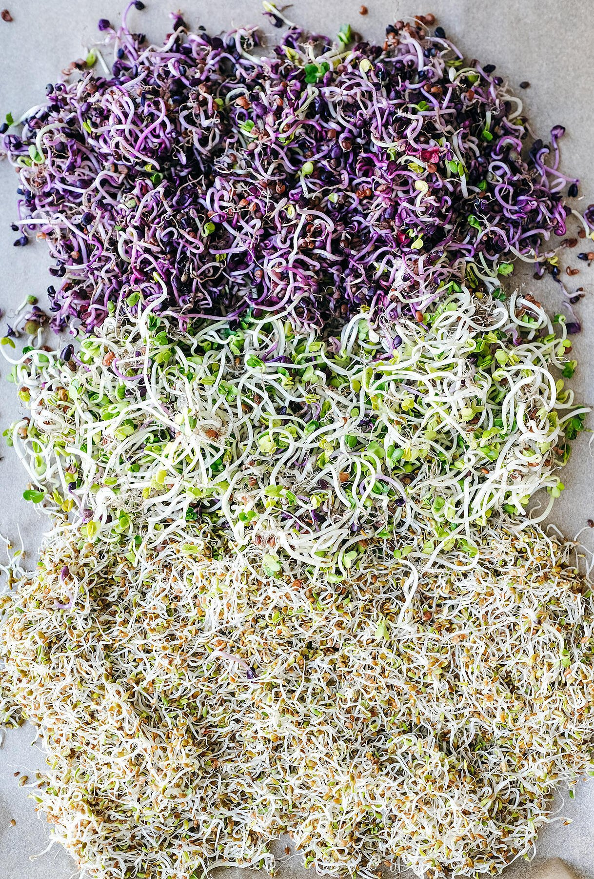 how to sprouts seeds